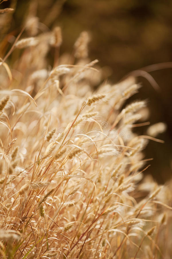 Download Dry Grass stock photo. Image of summer, dry, backlit - 28213984