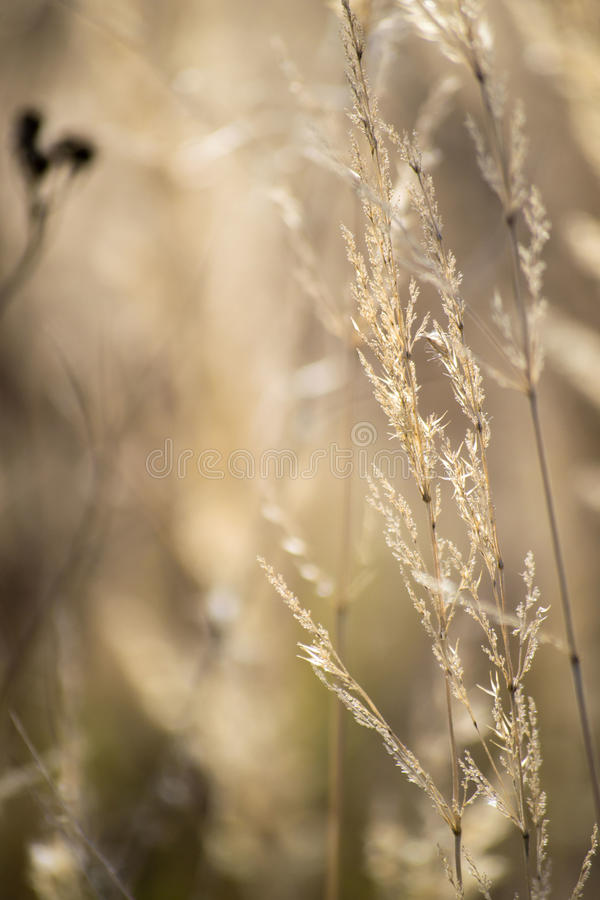 Dry grass in autumn stock photography