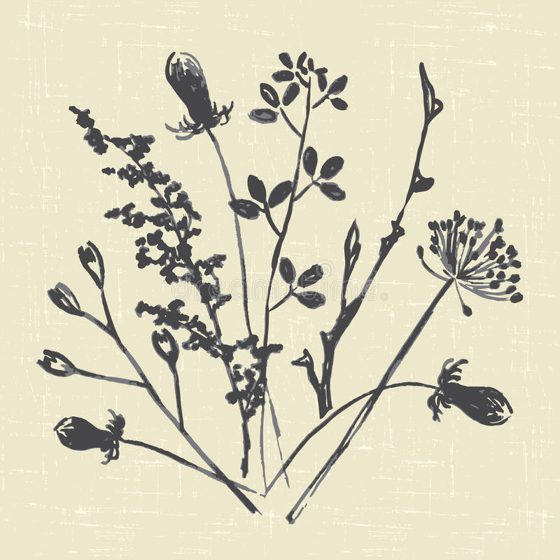 Dry grass stock illustration
