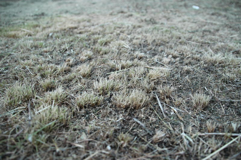 Dry grass background royalty free stock photography