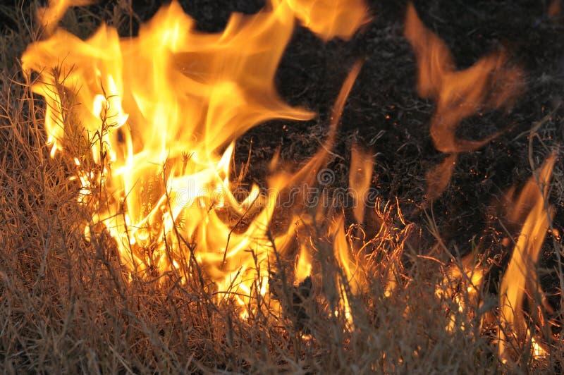 Veldt Fire Flowers stock image. Image of veldt, fire ...