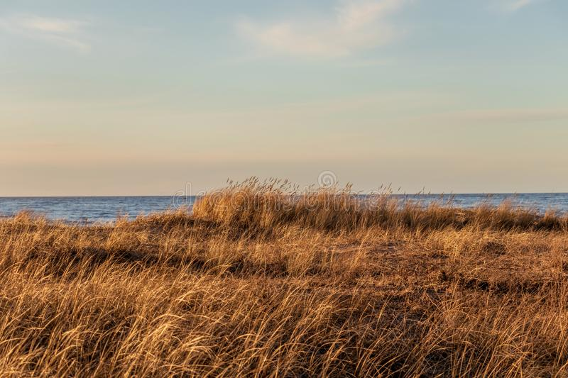 Dry grass on Calm Baltic sea background in golden hour. Calm Baltic sea background with dry grass poor vegetation in golden hour beach sand dune latvia sunset stock photo