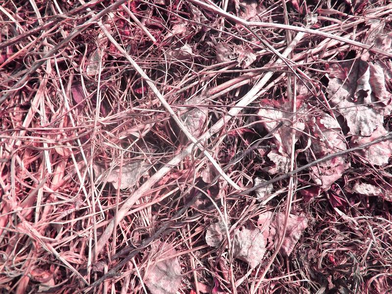 Dry grass faded. stock photography