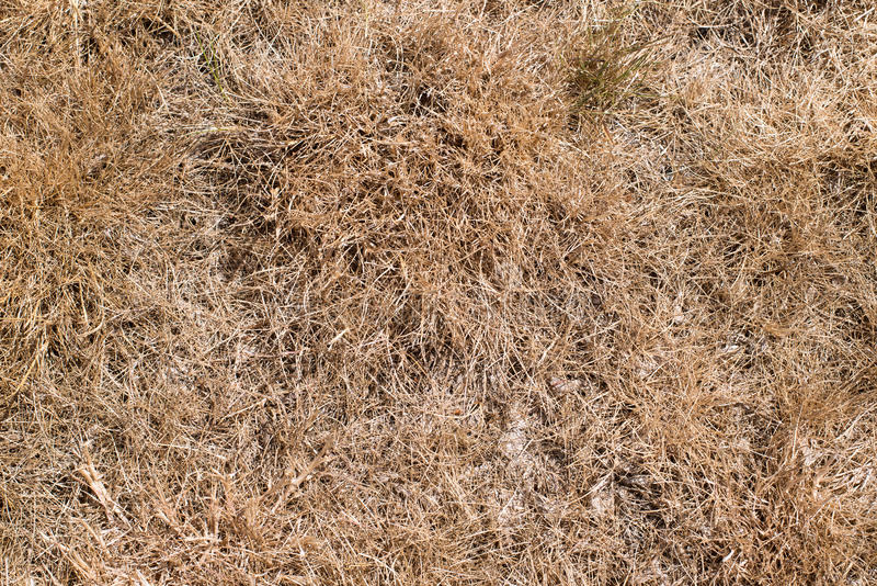 dry grass field background. Download Dry Grass Field As Background Stock Photo - Image Of Land, Nobody: 57085170 D