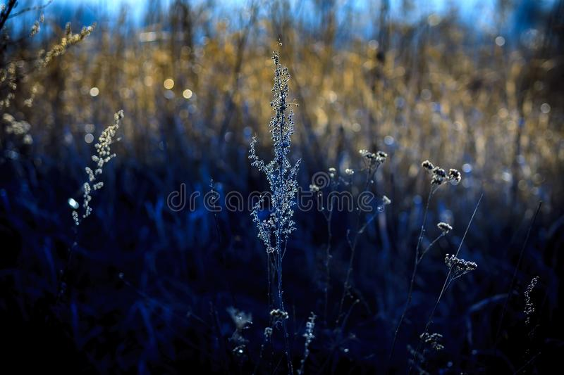Dry grass on a forest glade. royalty free stock photo