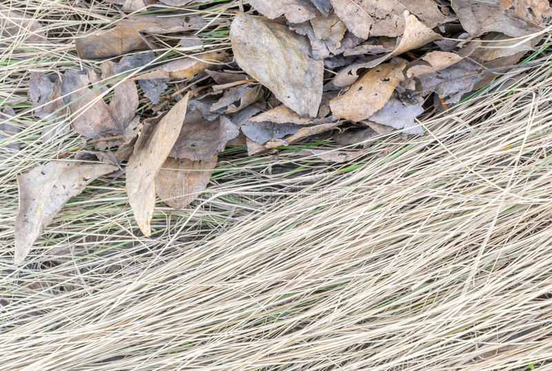 Download Dry Grass On The Ground With Brown Leaves Stock Image - Image of environment, wallpaper: 91650523