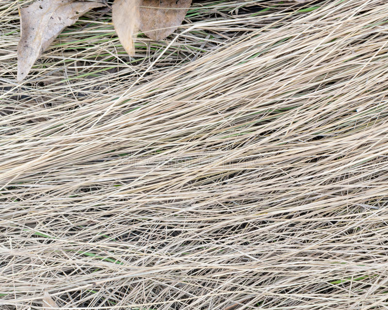 Download Dry Grass On The Ground With Brown Leaves Stock Photo - Image: 91650542