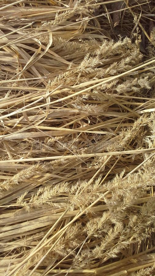 Dry grass, hay, straw, pring, warm, springtime, color stock image