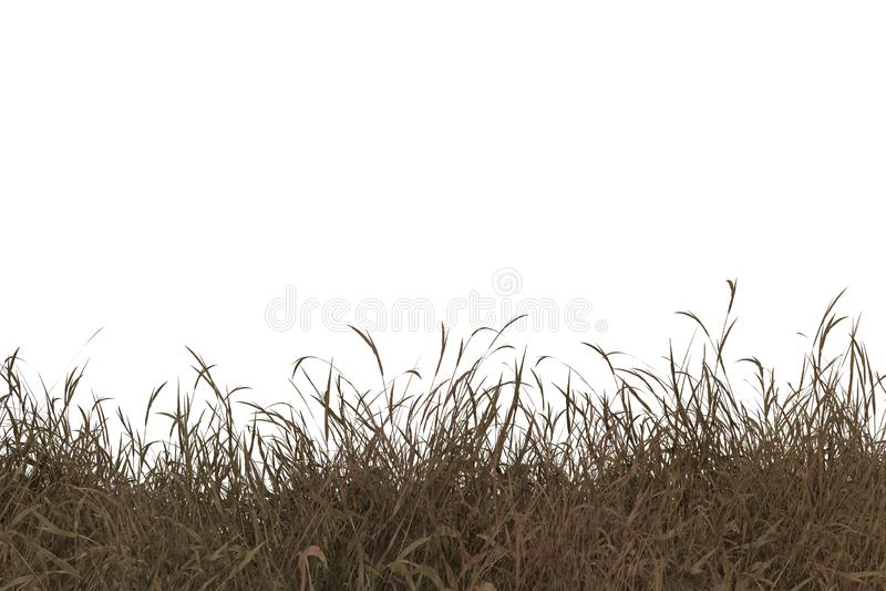 Creative autumn dry grass, creative, autumn png | PNGEgg