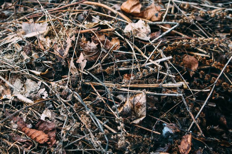 Dry leaves ob the ground stock image