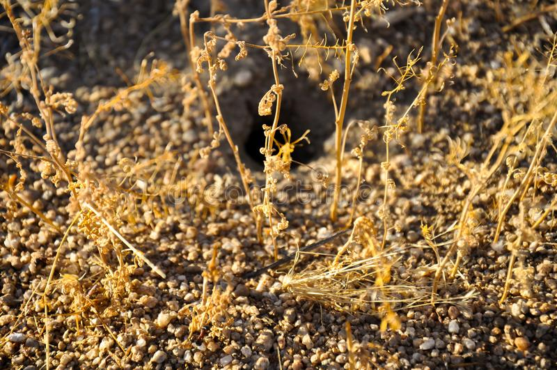 Dry grass macro and small ants walking on the ground stock image