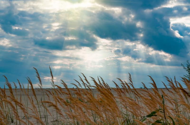 Dry grass on the river sand on the river Bank against the background of a stormy sky, dark clouds with sun gaps, royalty free stock images