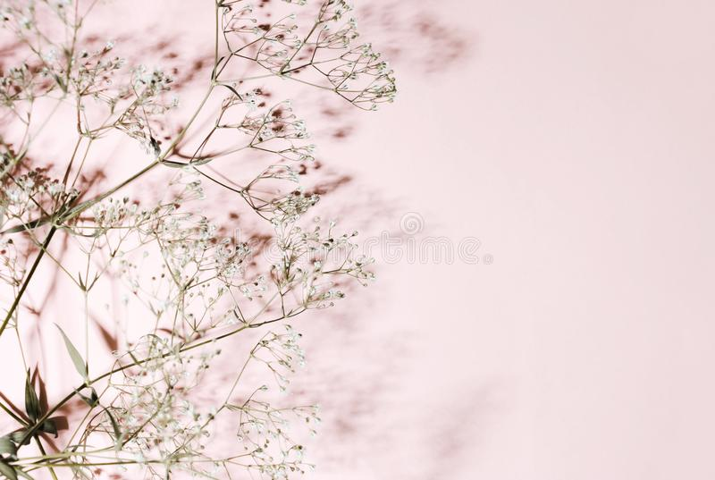 Dry grass and shade on a pink, coral background. Minimalistic pastel design stock photo