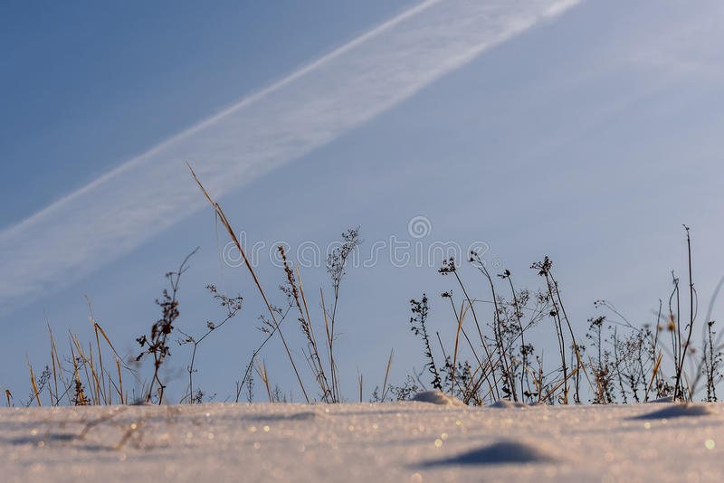 dry grass field background. Download Dry Grass Snow Field Stock Image. Image Of Background - 65555845