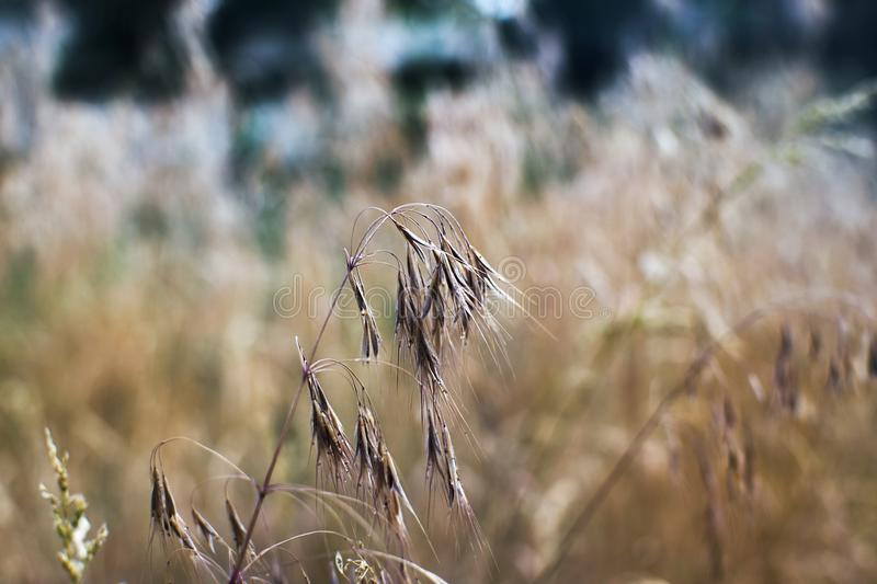 dry grass in summer heat royalty free stock photography