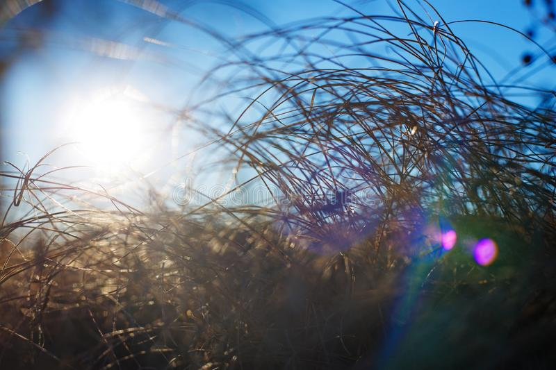 Dry grass in the sunlight, landscape background. Winter or autum royalty free stock image