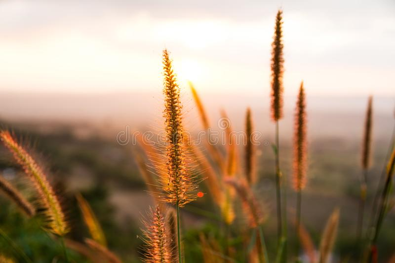 Dry grass at sunset. Background stock photo