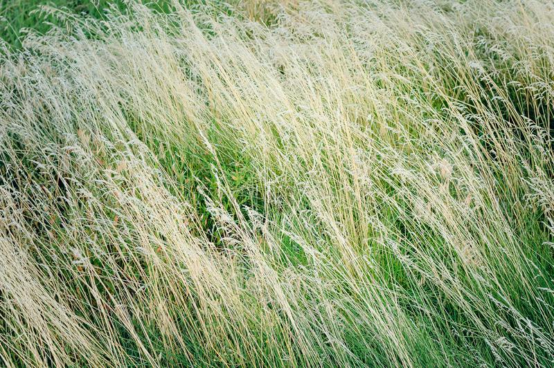 Dry grass, texture. Beautiful herbal background royalty free stock photography