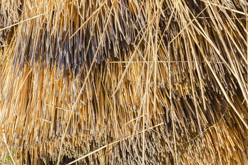 Dry Grass Thatch. Dry long grass cut closeup thatch material textures backgrounds royalty free stock photo