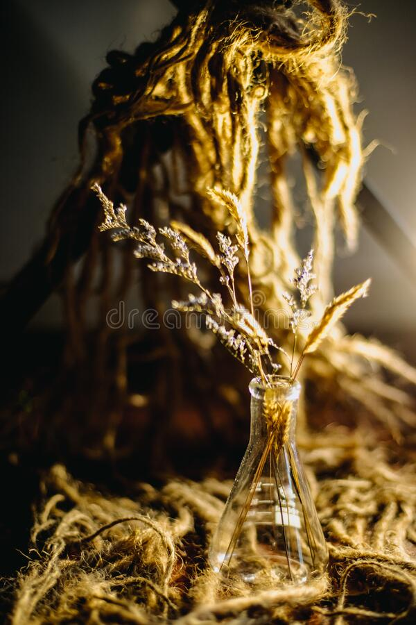 Dry grass in a vase, brown blurred background stock photography