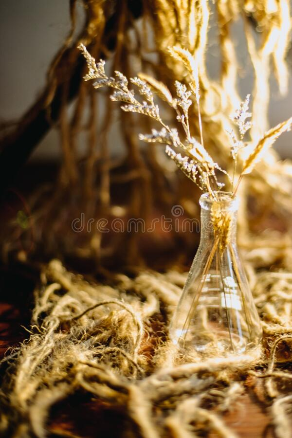 Dry grass in a vase, brown blurred background royalty free stock photos