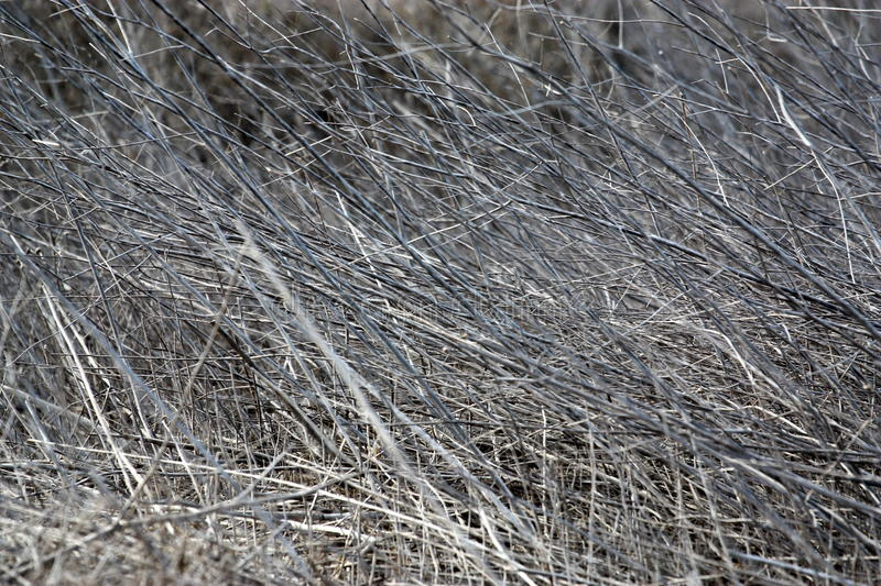 Download Dry Grass stock image. Image of fire, bush, combustible - 36371911