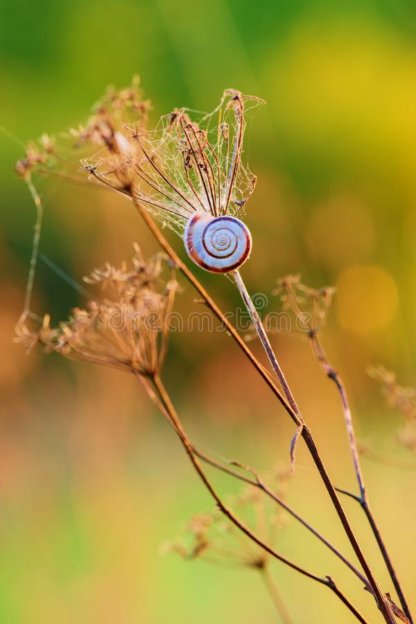 Free Dry Grass With A Small Snail At Sunset - Closeup Royalty Free Stock Photography - 126152667
