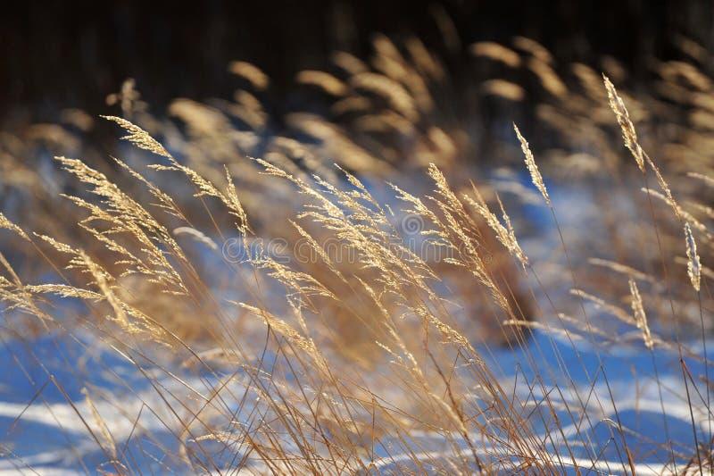 Dry grasses stock photo