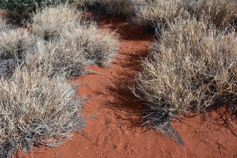 Dry gray desert grass on the red sand in the Outback. Red Centre, Northern Territory, Australia stock image