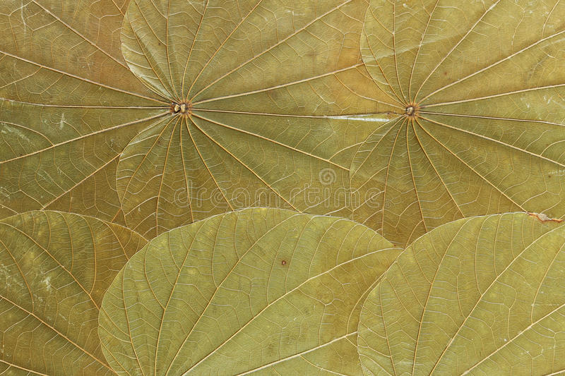Dry green leafs royalty free stock image