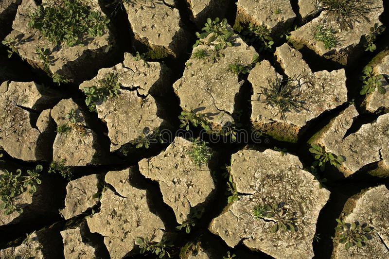 Dry ground. Carcked by the heat royalty free stock photo