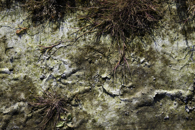 Download Dry ground stock image. Image of crack, dirt, leaves - 27470297
