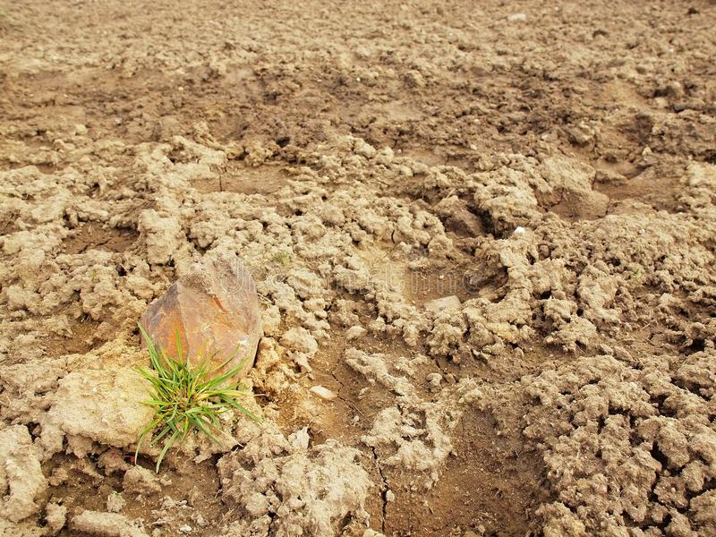 Dry ground of cracked clay with tuft of grass. Dry ground of cracked and crushed clay with last green tuft of grass royalty free stock photo