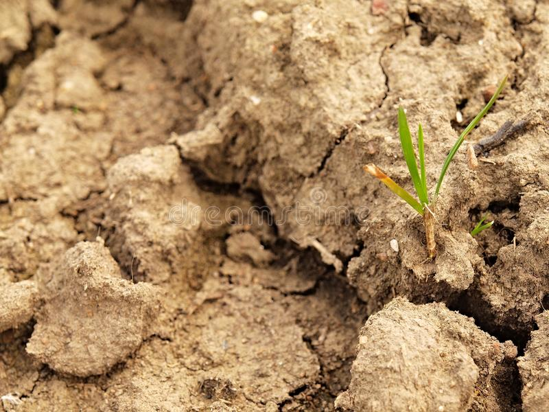 Dry ground of cracked clay with tuft of grass. Dry ground of cracked and crushed clay with last green tuft of grass stock photos
