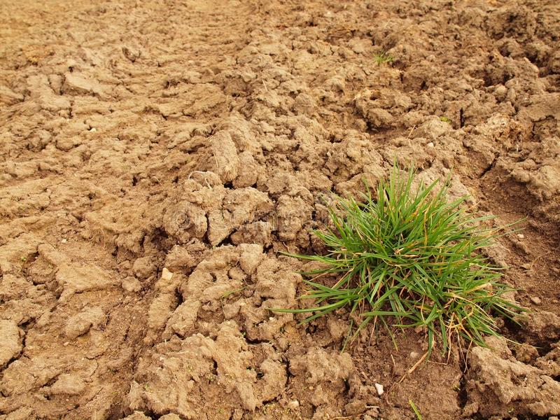 Dry ground of cracked clay with tuft of grass. Dry ground of cracked and crushed clay with last green tuft of grass royalty free stock images