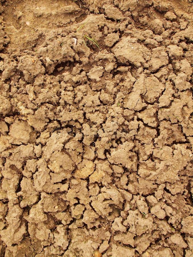Dry ground of cracked clay with tuft of grass. Dry ground of cracked and crushed clay with last green tuft of grass stock image