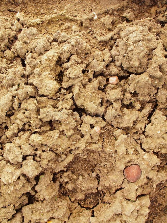 Dry ground of cracked clay with tuft of grass. Dry ground of cracked and crushed clay with last green tuft of grass stock images