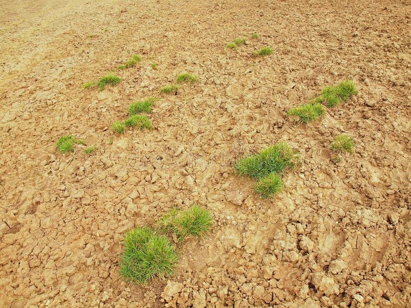 Dry ground of cracked clay with tuft of grass. Dry ground of cracked and crushed clay with last green tuft of grass royalty free stock photography