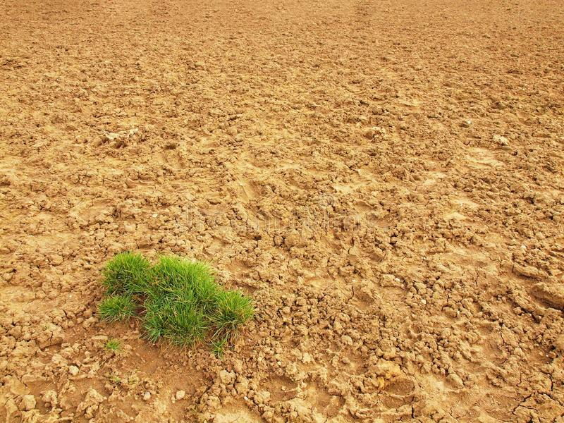 Dry ground of cracked clay with tuft of grass. Dry ground of cracked and crushed clay with last green tuft of grass royalty free stock photos