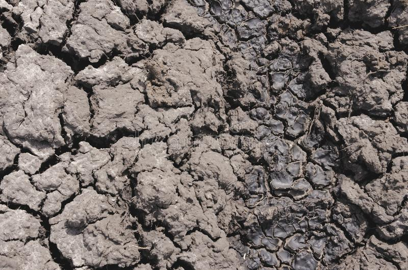 Dry ground. Dry gray ground with many cracks royalty free stock photos