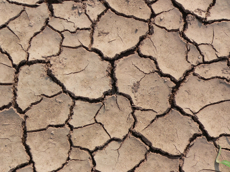 Dry ground texture. Dry Crackled Ground Texture (view from top royalty free stock photos