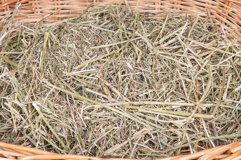 Dry hay in the basket. Empty nest of dry hay in a wicker basket, close-up royalty free stock image