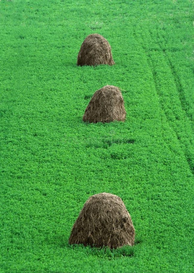 Download Dry haystacks stock photo. Image of haystack, nature, path - 1043188
