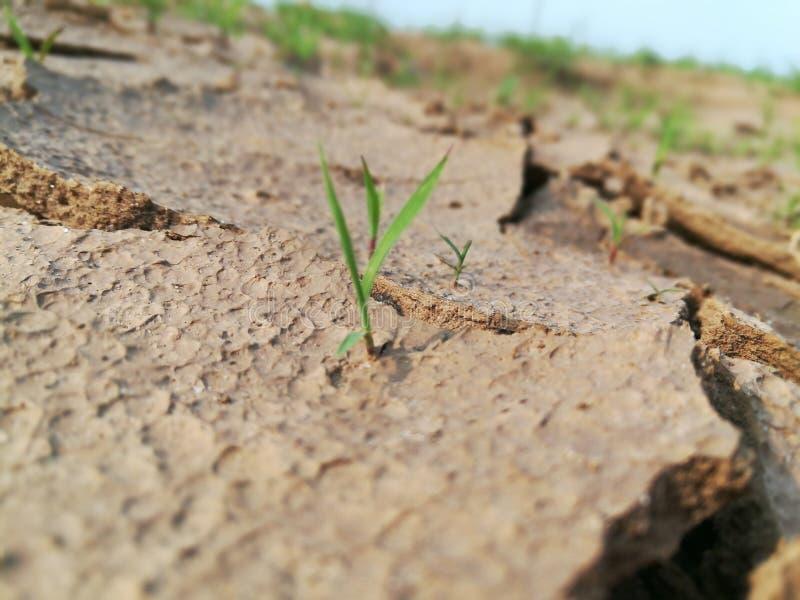 Dry Land Waiting for Raining Season royalty free stock photo