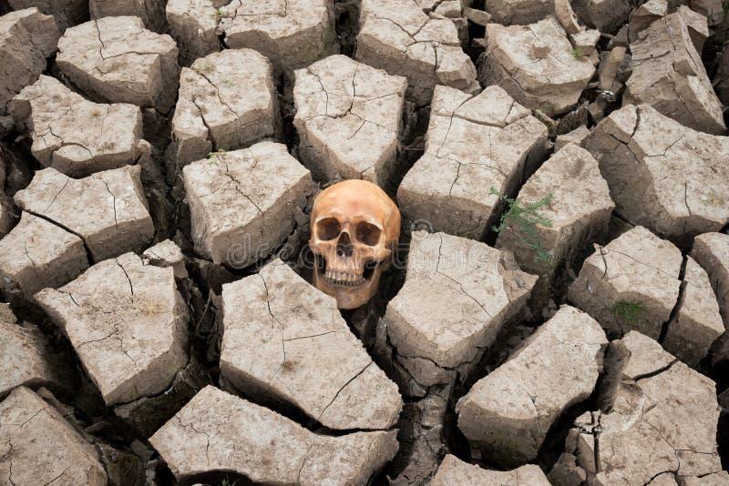Dry land head skull stock photo