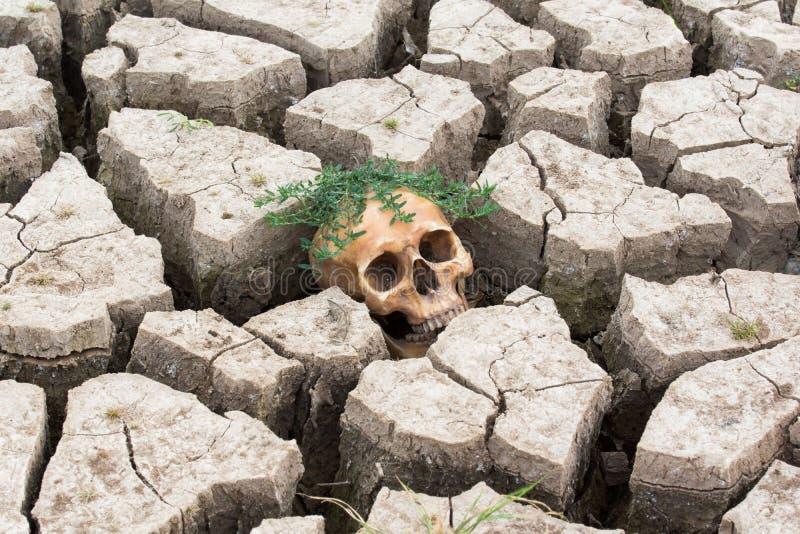 Dry land head skull royalty free stock photo
