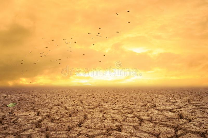 Dry land and hot dry air. There are birds flying back to the nest stock photo