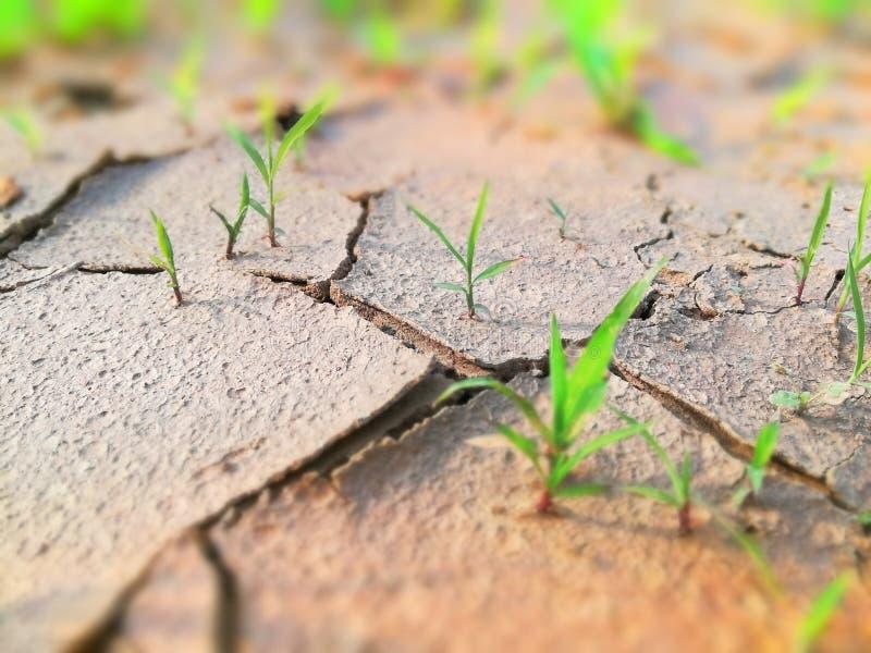 Dry Land waiting for Rain royalty free stock photo