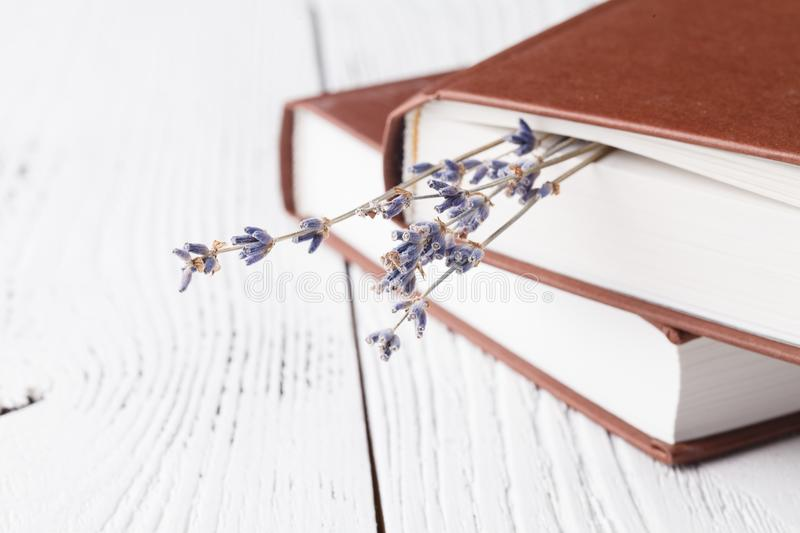 Dry lavender in the book royalty free stock photography