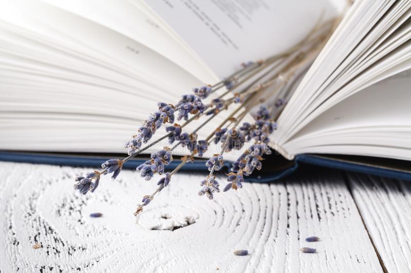 Dry lavender in the book stock image
